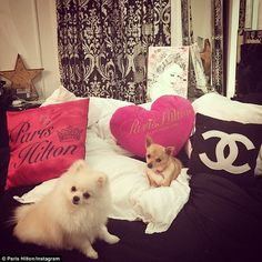 It's a dog's life: The night before, Paris shared a shot of Prince Hilton, left, and Peter...