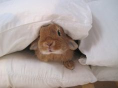 Boo! There's a bunny in your pillows! - June 27, 2013