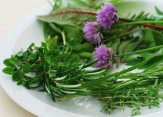 Kdy mohou bylinky uškodit?