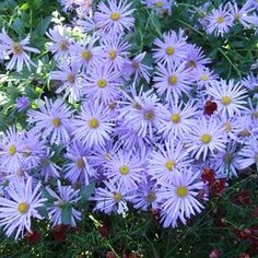 barrenwort Types Of Blue Flowers, White And Blue Flowers, Cut Flowers, Purple Flowers, Pink White, Flowers Garden, Blue Hydrangea, Red Purple, Flower Gardening