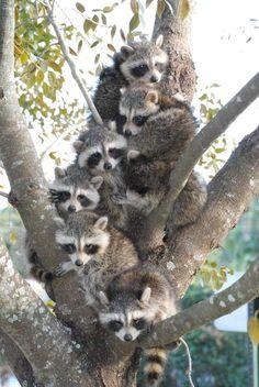 Tree-full of Trouble.Y luego nos quejamos de la falta de espacio de nuestras viviendas
