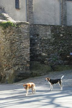 The trail muses of La Muse - always ready to lead a walk anywhere! #retreat #france #lamuse #dogswhowalk