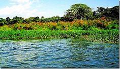 Laguna Manatí. Humedales del Ozama, Santo Domingo Norte y Este, R.D.