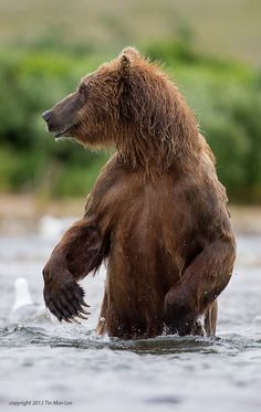 A Man in a Bear Outfit? by Tin Man on 500px.  Brown bear