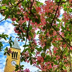 May Photo by Krishnakumar Agarwal Cornell University, Ithaca, NY College Campus, College Life, Dream School, Cornell University, Big Ben, Ivy, Community, Landscape, Building