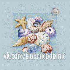 shells on blue-1