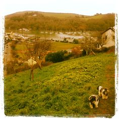 Dartmouth Orchard with a gorgeous view over the River Dart South West Coast Path, South Devon, Over The River, Dartmouth, Great View, Ladies Boutique, Small Towns, Great Places, Paths