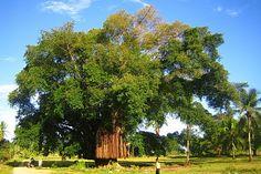 Davao del Norte, Talikud,