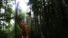 Dino Park, Rasnov. #dinopark #rasnov #romania Dino Park, Inspire Others, Places To See, Country, Plants, Pictures, Travel, Inspiration, Photos