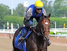 Paynter, this horse will be missed  http://sportsbettingarbitrage.in