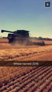 Wheat harvest is fin