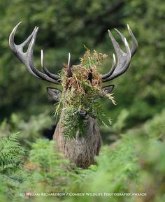 Este concurso de fotografía premia las imágenes más absurdas y divertidas del mundo animal