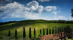 Az Agr Querceto di Castellina nel Castellina in Chianti, Toscana