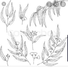 Collection of eucalyptus branches sketch vector image on VectorStock Branch Drawing, Branch Vector, Eucalyptus Branches, Vector Art, Royalty Free Stock Photos, Drawings, Illustration, Image, Collection