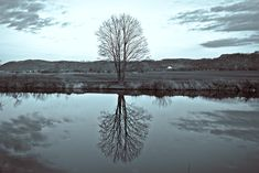 reflection - Clickasnap - The world's largest, free to use, paid per view, image sharing platform 0 Image, Image Types, View Image, Pay Per View, Nature View, Image Sharing, Worlds Largest, Reflection, My Photos