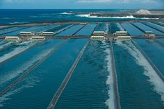 Hawaiian Spirulina ponds