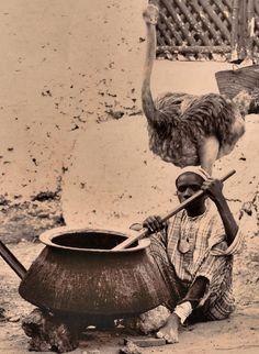 gratis afrikansk ebenholts