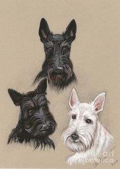 Choose your favorite scottie dog paintings from millions of available designs. All scottie dog paintings ship within 48 hours and include a money-back guarantee. Animals And Pets, Funny Animals, Dog Rules, Dog Paintings, Westies, Dog Art, Cat Breeds, Mans Best Friend, Dog Treats