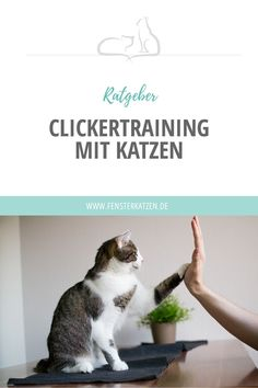 Clicker training with cats- Clickertraining mit Katzen Most of you will probably do the one or … - Baby Puppies, Baby Dogs, Pet Dogs, Dogs And Puppies, Animals And Pets, Baby Animals, Cute Animals, Over The Rainbow, Animal Pictures