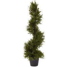 Nearly 30-inch Rosemary Spiral Tree