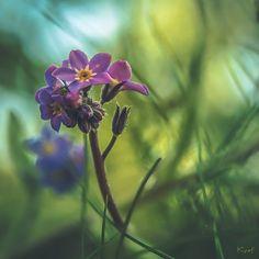 Efflorescence... by Ikonokl4st on DeviantArt