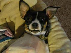 Gracie smiles :)