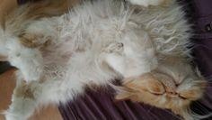 La bella durmiente.  Siesta del mediodía!