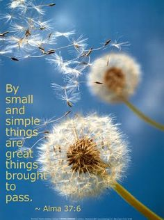 """By small and simple things are great things brought to pass."" (Alma 37:6)"