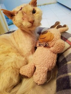 His Friendliness Almost Cost Him His Life, But This Cat Continues to Love and Trust. I am crying at the cruelty of people.