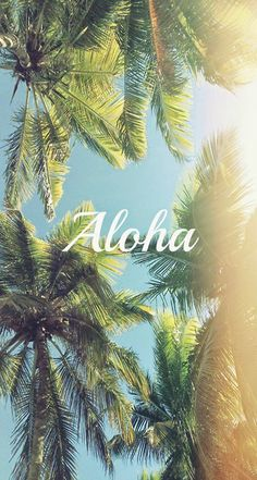 Aloha-Palm-Trees-iphone-5s-parallax-wallpaper-ilikewallpaper_com.jpg 744×1 392 pixels