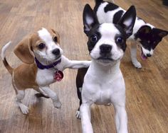 When you have one too many and your friend says it's time to go home Puppy Classes, Visiting Nyc, Dog Training, Boston Terrier, To Go, Puppies, Cute, Animals, Cute Animals