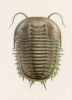 Trilobite, Paradoxides sp., extinct - John Sibbick  Gouache, undated, © Natural History Museum