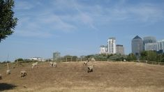 Mudchute Farm and Park: The largest urban farm in the London area with 34 acres of open parkland, in the heart of the Isle of Dogs. London Must See, Things To Do In London, Free Things To Do, Isle Of Dogs, Travel Uk, Urban Farming, Free Stuff, Horse Riding, Farm Animals