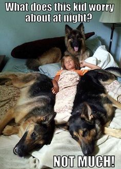 German Shepherds keep their Human Sister Safe