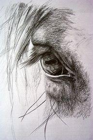Caii in lumea artelor. Horse drawings