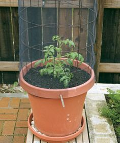1000 Images About Container Gardening On Pinterest