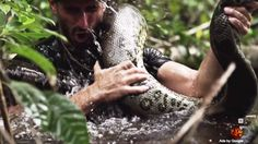 Paul Rosolie's try at being ingested with the aid of the utilization of an anaconda aired Sunday night time time time on Discovery Channel   ...