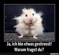 Ja, ich bin etwas gestresst! | Lustige Bilder, Sprüche, Witze, echt lustig