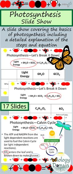 Photosynthesis Powerpoint Slide Show Photosynthesis And Cellular Respiration, Life Science, Downlights, Biology