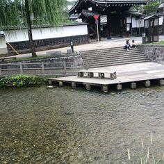 """""""白川 Shirakawa River #river #kyoto #japan #일본 #쿄토 #여행 #日本 #京都 #旅行"""" Photo taken by @ishideo on Instagram, pinned via the InstaPin iOS App! http://www.instapinapp.com (06/21/2015)"""
