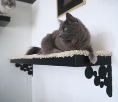 Add carpet to a shelf for a great perch. Plus, don't you love this cat's striking green eyes?