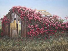 I hope I am identifying this correctly. I believe this rose covered barn is off the highway between Mendocino and Fort Bragg California. I see it each time I visit there and keep expecting it to collapse some day. It seems to be leaning and is quite old but so pretty!