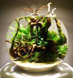 Layout 87 - James Starr-Marshall - Tropica Aquarium Plants