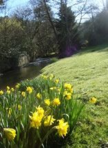 Self catering cottages in the outstanding Gara Valley in Devon. Watermill Cottages, your dog friendly get away from it all Devon holiday destination. Devon Holidays, Stone Cottages, Self Catering Cottages, South Devon, Dartmouth, Bloomsbury, Holiday Destinations, Dog Friends, 18th Century