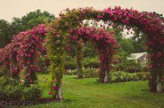 Elizabeth Park Rose Garden 24