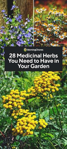 28 medicinal herbs you need in your garden herb garden - flower ideas, . - Garden Care, Garden Design and Gardening Supplies