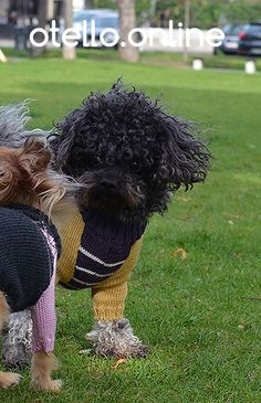 Xanthe Hundepullover für den bodennahen Liebling. Wärmt und gibt Geborgenheit. #otelloonline #dogsweater #dackel #bolonka #chihuahua #toypoodle #kleinerhund #adorabledog #sweetdog #love #愛犬 #トイ #あさんぽ #canino #caniche #chien #perro #чихуахуа #koira #hundur #hund #handmade #vienna #merinowool #quality #stripes Dog Sweaters, Chihuahua, Cute Dogs, Vienna, Handmade, Stripes, Weenie Dogs, Hand Made, Chihuahua Dogs