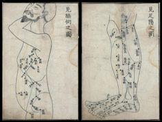 cartes d'acupuncture torse et des jambes