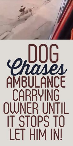 Dog Chases Ambulance Carrying Owner Until It Stops To Let Him In