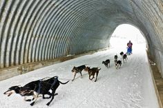 Mushing in the Lleida Pyrenees (Spain). www.lleidatur.com    Photography: @mustapanki